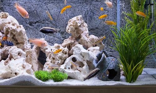 سنگ پوکه جهت استخر ماهی